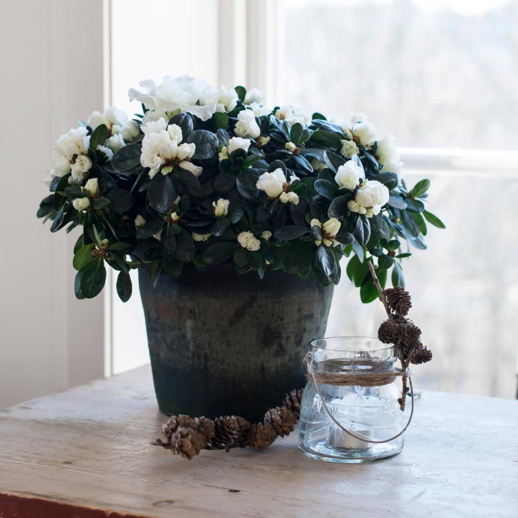 Pynt til advent med blomster fra FLORISS