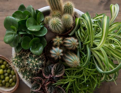 Trendy grønne planter
