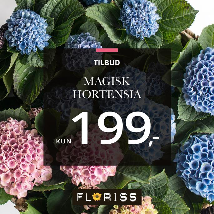 Magisk Hortensia hos Floriss